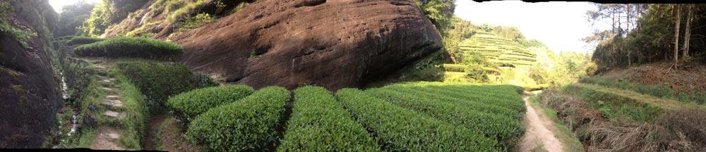 Cesta k čajovým zahradám - přes další plantáže a keříky...