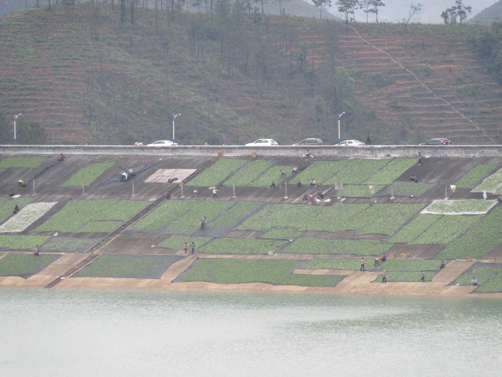 Sušení čaje na obskurním místě - na vnitřní straně obrovské přehrady u Fénixu = ještě přijatelný způsob sušení na plátně/síťovině